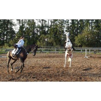 Верховая езда - индивидуальное занятие - выходные