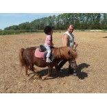 Катание на лошади будни